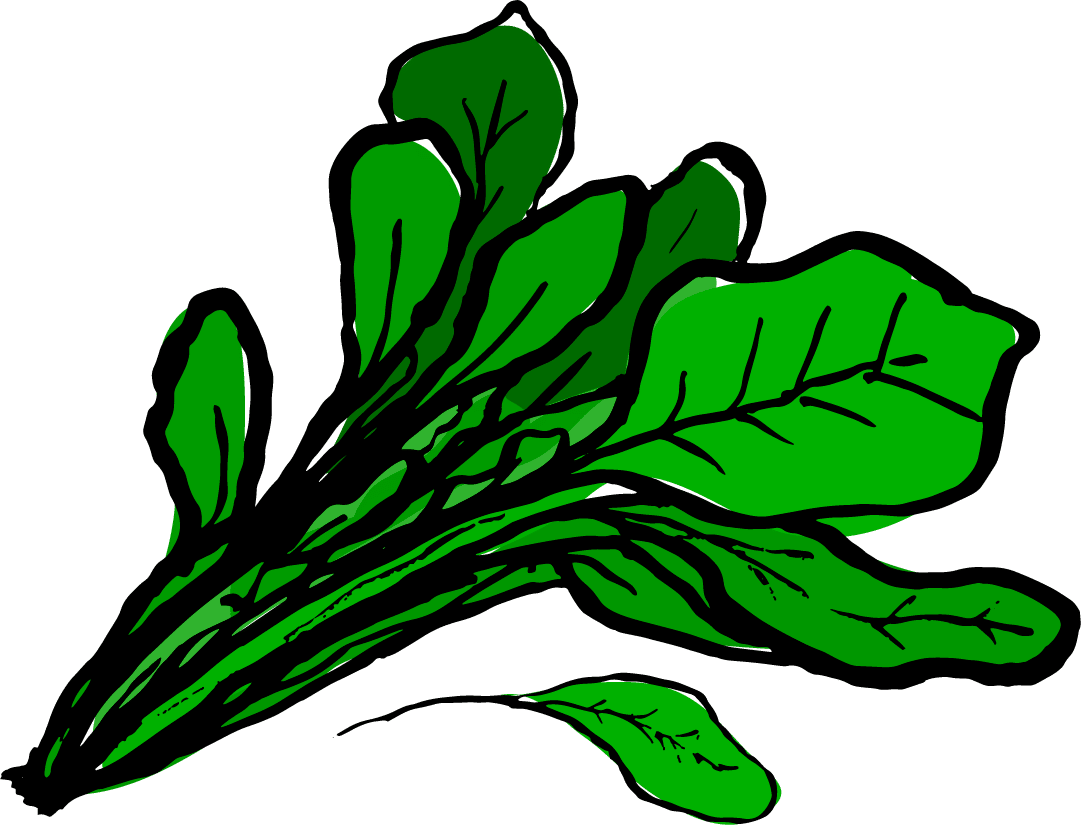 Spinach Leaves Clipart Www Pixshark Com Images